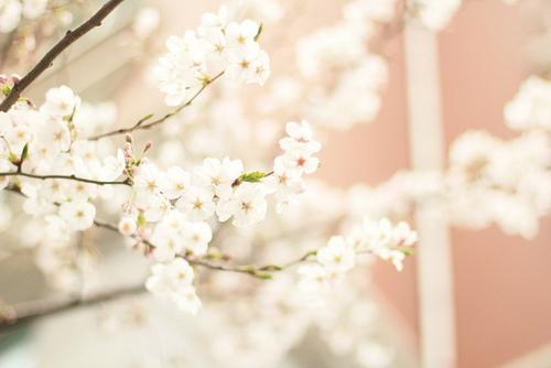 ストレスや自律神経の乱れに振り回されない!春の漢方養生法